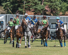 Polo (DaveMac photography) Tags: polo newforest england newforestpoloclub sunday sunnyafternoon ponies equestrian equine mallets events pologame outdoors