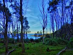 Seaside forest (elphweb) Tags: hdr highdynamicrange seaside ocean water sky skies trees forest bush nsw australia