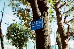 東京都荒川區東尾久 Arakawa-ku, Tokyo / Kodak ColorPlus / Nikon FM2