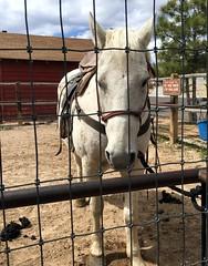 Utah - Bryce - Old West Town - Horse (jared422_80) Tags: utah bryce canyon may 2016