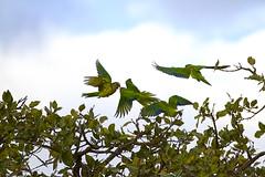 5399 (fpizarro) Tags: bambuí centrooeste minasgerais mg pds pordosol pássaros sol céu azul aoarlivre animal gato cão cachorro fpizarro