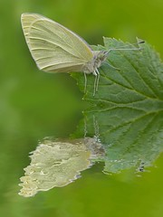 butterflies butterfly butterfliesoftheworld bugs... (Photo: Bryla Jarek on Flickr)