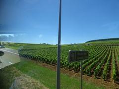 Route des Grands Crus - Route de Dijon - sign