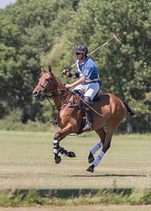 polo pony cantering to start (DaveMac photography) Tags: polo newforest england newforestpoloclub sunday sunnyafternoon ponies equestrian equine mallets events pologame outdoors