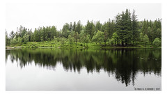 """Forest reflections <a style=""""margin-left:10px; font-size:0.8em;"""" href=""""http://www.flickr.com/photos/66444177@N04/35783532176/"""" target=""""_blank"""">@flickr</a>"""