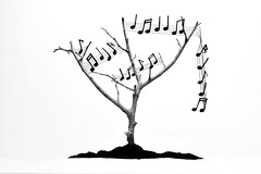 Árbol musical (osruha) Tags: árbol arbre tree música music notasmusicales notesmusicals musicalnotes composition composició composición pentagrama musicalstave blancoynegro blancinegre blackandwhite bn bw monocromo monochrome monocrom nikon nikonistas bodegón bodegó stilllife d750 flickr
