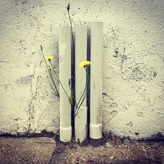 Blooming pipes (jeangrgoire_marin) Tags: concrete urban plastic pipe flower