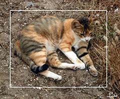 La petite chatte du camping (lise.portugal) Tags: cat chatte gata gatinha