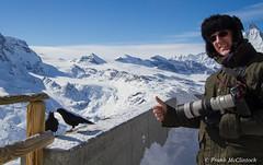 Alpine Chough (Paradise in Portugal) Tags: alpinechough pyrrhocoraxgraculus chough switzerland zermatt matterhorn