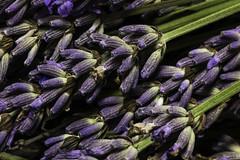 Lavender bunch (me.behindthelens) Tags: macromondays texture lavender flower purple stems castlefarm thehopshop kent shoreham memberschoicetexture