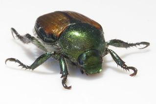 Textures on a Beetle