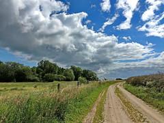 Der Weg (Wunderlich, Olga) Tags: rügen insel himmel wolken weg mohn raps getreide bäume zaun gras juli natur