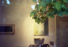 (StayFair) Tags: vine grapes throughwindow interior olympusom10 zuiko50mmf18 fujisuperiaexpiredin2003 200asa summer