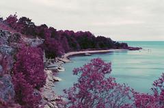 leetse cliff (inmno) Tags: lomochrome purple lomography aerochrome minolta ishootfilm