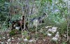 Sentiero Geologico (elisecavicchi) Tags: goats transhumance forest woods green summer explore bell campana capre abruzzo sentiero geologico gole del sagittario central italy apennine mountains transumanza herding terrain