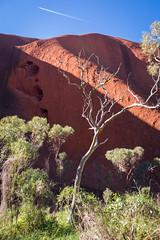 Uluru - Mutitjulu Waterhole-4