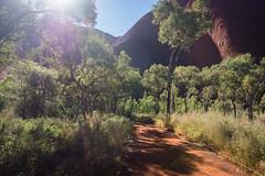 Uluru - Mutitjulu Waterhole-2