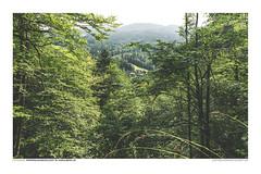 FOTOSERIE RAPPENLOCHSCHLUCHT #15 (PADDYSCHMITT.DE) Tags: rappenloch rappenlochschlucht schlucht voralberg dornbirn gäntle waterfall wasserfall wald tobel klamm