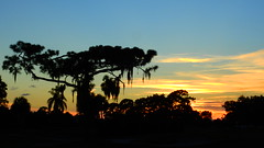 July 20th Sunest (Jim Mullhaupt) Tags: sunset sundown dusk sun evening endofday sky clouds color red gold orange pink yellow blue tree palm outdoor silhouette weather tropical exotic wallpaper landscape nikon coolpix p900 bradenton florida manateecounty jimmullhaupt cloudsstormssunsetssunrises photo flickr geographic picture pictures camera snapshot photography nikoncoolpixp900 nikonp900 coolpixp900