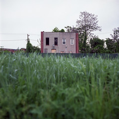 (patrickjoust) Tags: 6x6 medium format 120 tlr twin lens reflex c41 color negative tungsten balanced shift expired discontinued film manual focus analog mechanical patrick joust patrickjoust east baltimore maryland md usa us united states north america estados unidos urban street city abandoned vacant empty row house home formstone brick community garden green grass