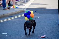 (Giramund) Tags: londonpride lgbt celebration colourful rainbow dog balloon loveislove equality