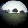 Horse Chestnut (pho-Tony) Tags: pinhole treehorsechestnut bierettepinhole world photography day wppd worldpinholephotographyday