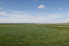 Alberta's prairies (Canadian Pacific) Tags: alberta canada canadian rural countryside prairie prairies flat landscape calgary 2017aimg9567 great plains