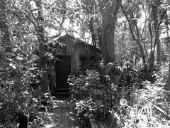 Little Cabin (PelicanPete) Tags: cabin woods whimsical green saintaugustine florida city usa spanishstreet artist gallery bench walkway summer unitedstates littlecabin wood monochrome tranquil quaint tree shadow outdoor garden bw overgrown blackwhite independenceday 7417 oldgrowthtrees pavers hurricane survivor dark original tinyhouse hot