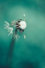 the elements (christian mu) Tags: flowers nature bokeh spring münster muenster botanicalgarden botanischergarten schlossgarten christianmu sonya7ii sony 9028g 90mm 9028 macro