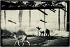 MAHAAKUTA : ON N'ATTACHE PAS LES CHIENS (pierre.arnoldi) Tags: inde india canon tameron chien mahaakuta badami karnataka photoderue photooriginale photonb pierrearnoldi