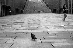 各走各路    Go their own way (C. Alice) Tags: summer blackwhite 2016 ilce6000 sony a6000 sonya6000 sonysel1670zcarlzeissvariotessart tessar zeiss carlzeiss korea asia seoul bird girl people blackdiamond bw bwartaward