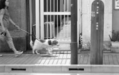 1706017_SRT101_025 (Matsui Hiroyuki) Tags: minoltasrt101 minoltamctelerokkorpf100mmf25 fujifilmneopan100acros epsongtx8203200dpi