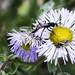 Sandia Pollinators 2
