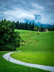 The Rain's Coming (albisserl) Tags: pilatus path horw forest cattle switzerland mountain cloud barn cantonlucerne luzern schweiz che