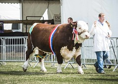 Kent Show Friday_379
