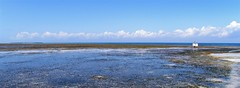 Zanzibar (Francesco Pesciarelli) Tags: zanzibar ocean water sky colors walkingman island africa flickr pesha panoramic wallpaper shore life big downloadable mentionmyname varied collection thoughtful colours
