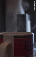 Evening Light (rumimume) Tags: potd rumimume 2017 niagara ontario canada photo canon 80d sigma mug cup steam tea