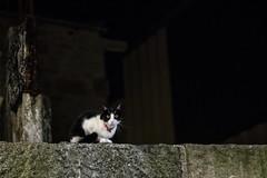 _IMG1022 Nocturna con gato (Rafael Ojea) Tags: pentax pentaxk1 gatos nocturnas pentaxsmc smcpentaxstar