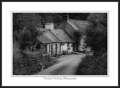 Dwelling by Castell Henllys (Chalky666) Tags: farm dog pembrokeshire wales landscape architecture art mono