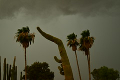 DSC_7552 (georgerocheleau) Tags: mesa arizona storm clouds rain lightning therebeastormabrewin