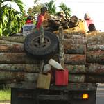 Logs on truck thumbnail