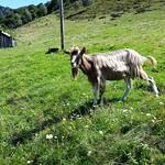 2014 - Traversata del Lago Maggiore