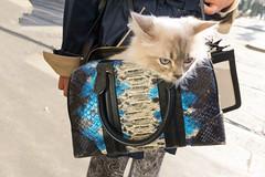 Cucù (pinomangione) Tags: pinomangione milano street gatto micio
