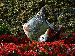 Bad Aussee Fischbrunnen P1090403 (martinfritzlar) Tags: badaussee kurpark fischbrunnen ausseerland salzkammergut steiermark österreich alpen stadt park kurort brunnen fisch styria austria alps town spatown fountain fish fishfountain