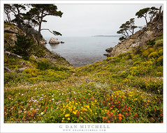 Meadow, Wildflowers, Cove (G Dan Mitchell) Tags: pointlobos state park reserve meadow wildflowers forest pacific ocean carmel bay north shore nature landscape monterey area coast california usa america