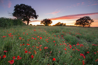 The Sun Finally Sets On The Shepshed Poppies