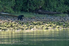 DSC06468 (GabriolaBill) Tags: ocean outfitters sony a7rii a7r2 photographer photographers tour whale whales sea lion lions bear bears tofino bc watching zodiac kyler vos eagle eagles nature vancouver island british columbia ilce7rm2 ilce7rmii