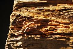 Auf dem Holzweg (FrauN.ausD.) Tags: holz wood memberschoicetexture macromonday makro struktur natur nikon d60 braun brown sonne sun texture splitter sliver baum tree kamin chimney