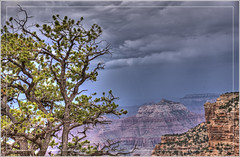 Threatening Sky (Runemaker) Tags: grandcanyon nationalpark caperoyal northrim arizona sky clouds storm stormy tree cliffs canyon