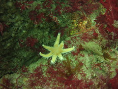 East of Outer Trinity Rock (Rob Dickson) Tags: diving scuba islesofscilly scillies scilly